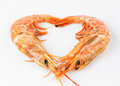 With all the love of the ocean photograph two prawns forming a heart on white background Royalty Free Stock Image
