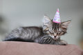 All partied out cute tired kitten wearing a birthday party hat taking a nap after a little girl s birthday party Stock Photos