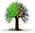 All seasons tree Royalty Free Stock Photo