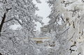 All white under snow, winter landscape at trees covered with heavy snow Royalty Free Stock Photo