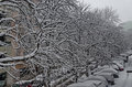 All white under snow, winter scenery at trees covered with heavy snow and street Royalty Free Stock Photo
