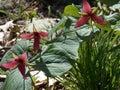 Allegany Flowers