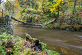 Allen Banks suspension footbridge Royalty Free Stock Photo