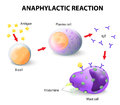 Allergy and anaphylaxis anaphylactic reaction as it occurs in mast cells basophils allergic autoimmune disorders are Stock Image