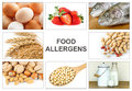 Allergy food concept allergens as eggs milk fruit tree nuts peanut soy wheat and fish text allergens easy to remove Stock Image