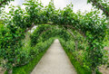 Alley with apple trees. Royalty Free Stock Photo