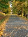 Alley on autumn