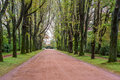 Alley avenue with tall trees green grass gravel walk path way road park Royalty Free Stock Photo