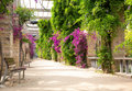 Alley with blooming flowers Royalty Free Stock Photo