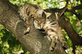 Alley cat is sleeping on the tree Stock Photos
