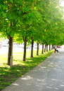Alley of chestnut trees in green city park Royalty Free Stock Photo