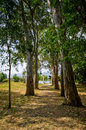 Alley cowered by threes branches Royalty Free Stock Image