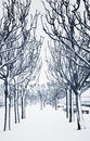 Alley empty in winter seasonal feature monochromatic toned Royalty Free Stock Photo