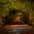 Alley in the Oliwa park in autumn scenery Royalty Free Stock Photo