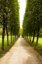 Alley in park, Arkhangelskoe Royalty Free Stock Photo