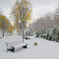 Alley in the park later in the autumn snow storm Royalty Free Stock Photography