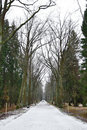 Alley in park, Pavlovsk Royalty Free Stock Photos
