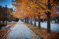 Alley in the park under autumn trees Royalty Free Stock Images