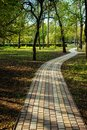 Alley, pathway in the city park in sunlight. Cobbled alley in the public  park. Green tree foliage. Nature outdoor vertical Royalty Free Stock Photo