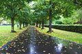 Alley after a rain wet asphalt covered with fallen leaves Stock Photo