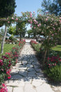 Alley with roses in pamukkale turkey Stock Image
