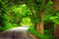 Alley in summertime asphalt road with trees on the side Royalty Free Stock Photo
