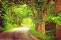 Alley in summertime green near asphalt road Royalty Free Stock Photos