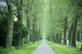 Alley of sycamore trees endless straight on between green after rain showers Stock Photos