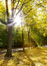 Alley of trees in autumn in the city park sun s rays through Royalty Free Stock Photography