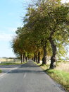 Alley with trees such stress are pretty but dangerous for motorbikes Royalty Free Stock Photography