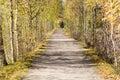 Alley of trees in umeå sweden aurumn Stock Image