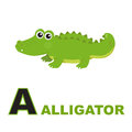 Alligator Arkivbild