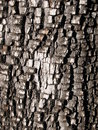 Alligator juniper bark Stock Photos