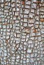 Alligator Juniper Bark - Background Royalty Free Stock Photo