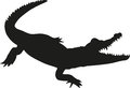 Alligator Silhouette