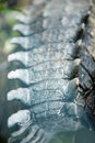 Alligator tail close up Royalty Free Stock Photo