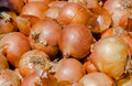 Allium cepa background with onions Royalty Free Stock Photo