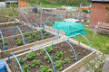 Allotment garden with raised beds Stock Images