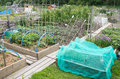 Allotment vegetable garden with raised beds Royalty Free Stock Photography