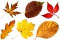 Z podzim listy na bílý 2