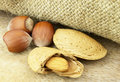 Almond with filbert Royalty Free Stock Photo