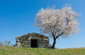 Almond old cottage next to a tree Stock Images