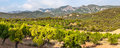 Almond trees in ports de besseit with mountains the background Royalty Free Stock Photos