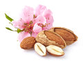 Almonds with flowers Royalty Free Stock Photo