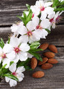 Almonds flowers on a wooden background Stock Images