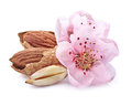 Almonds Kernel With Pink Flowers