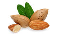 Almonds and leaves Royalty Free Stock Photos