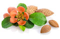 Almonds with leaves and flowers Royalty Free Stock Photo