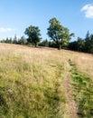 Almschachten Meadow With Pathw...