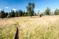 Almschachten Mountain Meadow I...